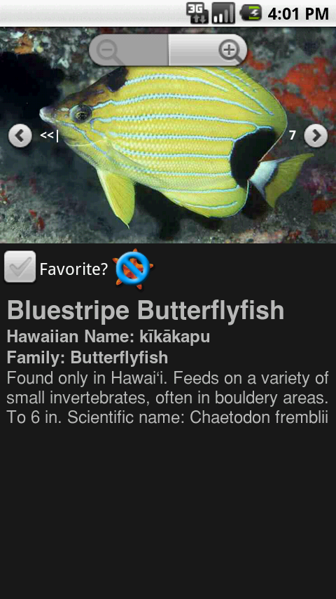 Bluestrip Butterfly Fish Zoomable View